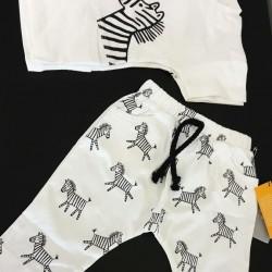 Zebras body